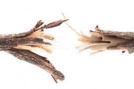 Stress Management Broken Branches